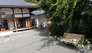 宝泉寺にはよく猫がいます(1)