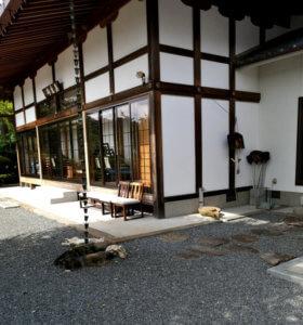 宝泉寺にはよく猫がいます(2)